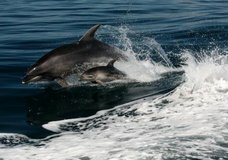 Explore NZ: Dolphin/Sail Adventure Combo :: click here for more information