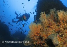 Northland Dive :: click here for more information