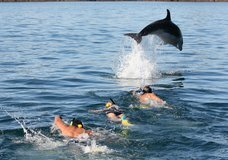 Explore - Swim with the Dolphins :: click here for more information