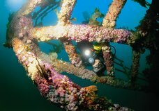 Paihia Dive: Wreck & Reef :: click here for more information