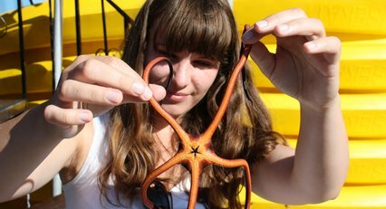 Starfish found amoungst the Bay of Islands